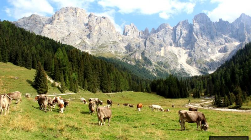 Panorama Val Venegia